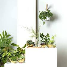 indoor plant hanger indoor plant wall hanging planter with grey thread plant hanger wall planter modern