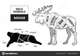 Cut Of Elk Set Poster Butcher Diagram Desert Ship