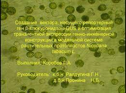 Диплом Создание вектора несущего репортерный ген β глюкуронидазы  В настоящее время весьма актуальными становятся проблемы загрязнения окружающей среды различными поллютантами в частности углеводородами нефти