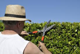 Hedge Shears Are For Hedges!