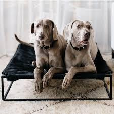 arvin grex angus dog bed black set