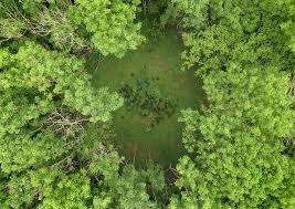 Secrets of the High Woods: Revealing Hidden Landscapes