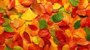 紅葉がカラフルな葉っぱの壁紙