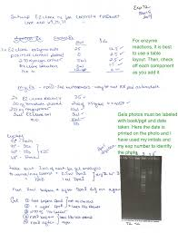 Lab Notebook Example Notebooks 2016 Biology 305 Laboratory
