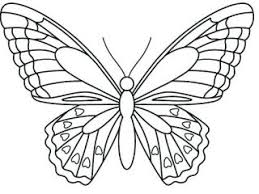 Butterfly Outline Template Flying Butterfly Outline Images Outline