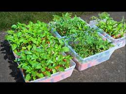 how to grow a garden from seed soil