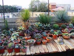 Small Picture Best Of Small Shade Garden Ideas Small Succulent Garden Design