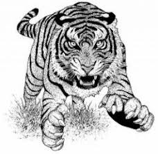 Small Picture 431 best tigerrrr images on Pinterest Tigers Tiger tattoo and
