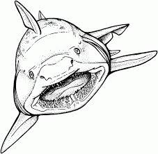 Small Picture Beautiful Shark Coloring Book Ideas New Printable Coloring Pages