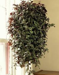 15 Benefits Of Best Hanging Plants Indoor That May Change Your Perspective  Pleasant in order to our blog, on this occasion We'll provide you with  about ...