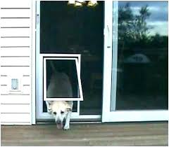 sliding glass door with dog door screen door with dog door exotic pet screen door pet door for screen door screen door sliding glass dog door insert