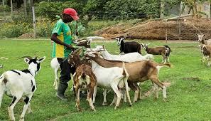 Image result for farming in nigeria