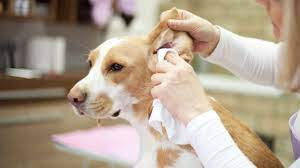 effective diy ear cleaner for dogs