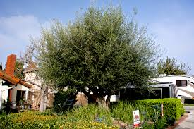 20 Best Trees Joe Grows In His Orchard Images On Pinterest  Fruit Southern California Fruit Trees