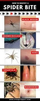 12 Best Spider Identification Images In 2019 Spider
