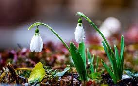 Сочинение на тему Весна в городе Сочинение на  Весна в городе
