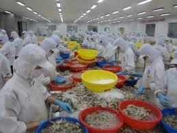 Shrimp Processing Factory