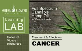 cbd oil cures pancreatic cancer
