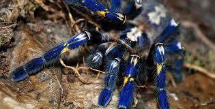 A Guide To Keeping Tarantulas By Experience Level Pethelpful