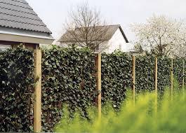 Gr Ner Sichtschutz Holz Sichtschutz An Der Grundstucksgrenze