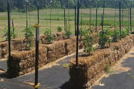 straw bale garden take 2 scene 2