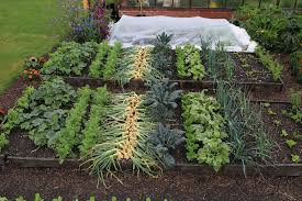 trial beds dig no dig plantings and