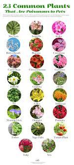 23 Common Plants Poisonous to Pets