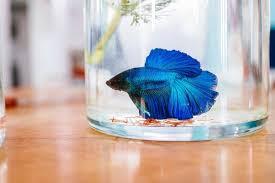 the 25 best betta fish tanks of 2021