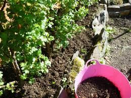 using compost carryoncomposting com