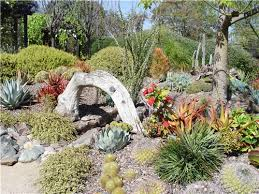 Small Picture Succulent and cactus landscape with driftwood arch feature