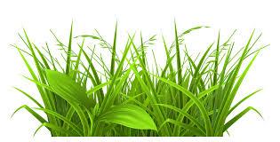 Tall Decorative Grass Grass Piece Clipart Clipartfest Tall Piece Of Grass Clipart