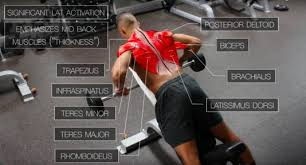 back workout routine best exercises