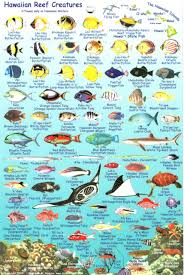 Oahu Fish Chart Oahu Fish Card Franko Maps Waterproof Card Franko Maps Ltd