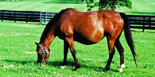 Image result for The Nutritional Requirements Of Horses