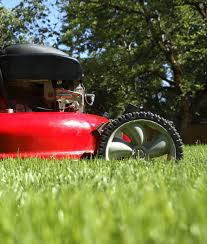 Image For Lawns Low Maintenance Lawn