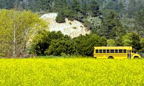 Next Stop For Retired School Buses Tiny Houses For Homeless