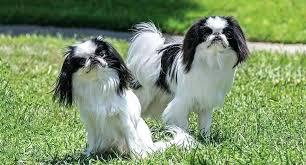 10x10 dog kennels craigslist used chin kennel eastern nc