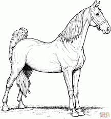 Realistic Horse Coloring Pages For Adults Free Of Horses Heads Dog