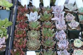 part of the appeal is the variety of colors and shapes but succulent plants in