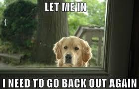 25 Funny Dog Memes - Dogtime via Relatably.com