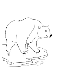 Small Picture How To Draw A Polar Bear Coloring Coloring Pages