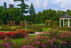 allentown rose garden