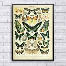 Different Types Of Insects Butterflies Papillon Chart Art