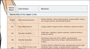 Dermatome Distribution Chart Dermatomes Myotomes Nerve Pattern Poster 18 X 24