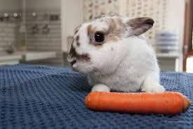 Päppeln Zwangsernährung - Kaninchenwiese