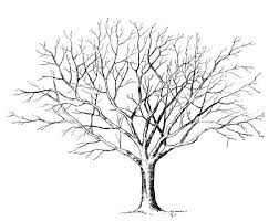 Small Picture 26 best Tree Tattoo Ideas images on Pinterest Drawings Tree