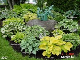 Small Picture 436 best Hosta Gardening images on Pinterest Shade plants Hosta