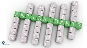 Image result for Kaya akan antioksidan