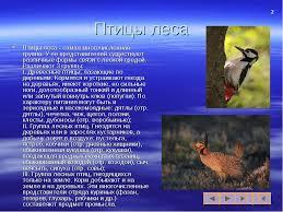 Презентация по биологии на тему Экологические группы птиц  слайда 2 Птицы леса Птицы леса самая многочисленная группа У ее представителей суще