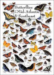Moth Identification Chart Butterflies Of The Mid Atlantic And Southeast Butterfly